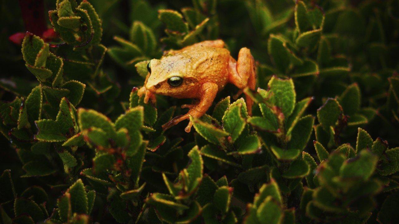 Foto individual de Agua Sagrada