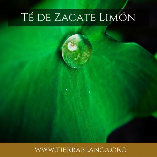 ¿Qué es el zacate limón?